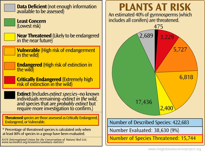 Plants at Risk of Extinction
